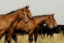 Se realizará un taller sobre cuidados básicos de caballos en la máxima