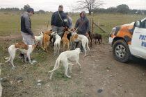 Infraccionaron a cuatro personas por cazar con perros galgos