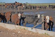 Continúa en vigencia el Programa Ganadero para productores locales