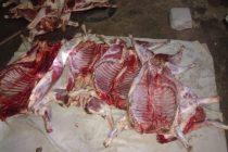 Recuperan 14 ovinos tras un allanamiento en Barrio Coronel Dorrego