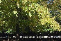 Plan de Incentivos a la Actividad Forestal: entrega de plantas
