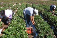 El campo emplea a casi 80 mil personas en la provincia y el 80% son varones
