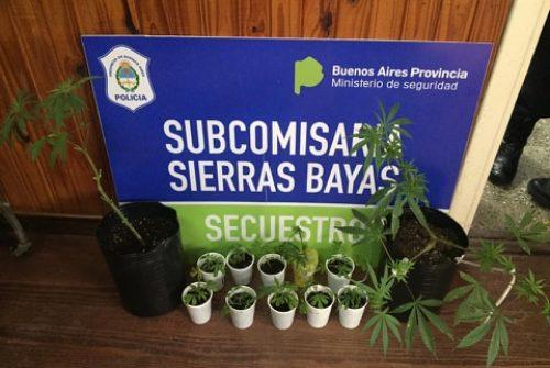 Secuestraron en un invernadero casero plantas de marihuana