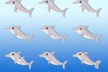 A contar delfines: el desafío que arrasa en cuarentena