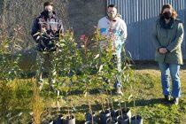 Se realizó la entrega de 40 plantines de árboles de diferentes especies