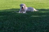 La historia de Copito, un perro penitenciario que en su primera jornada laboral detectó drogas en seis encomiendas