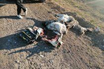 Aprehendieron a varias personas por cazar sin permiso y con galgos