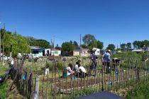 La juventud peronista está realizando una huerta comunitaria en el B° 12 de octubre