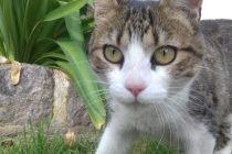 Este domingo se celebra el día mundial de los animales