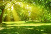 Semana con temperaturas primaverales para Olavarría
