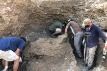 Encontraron  un gliptodonte en el Salto de Piedra
