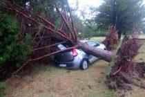 Un fuerte temporal de viento y lluvia provocó serios destrozos en Darregueira