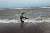 San Cayetano: encontraron dos anclas a metros de la orilla en la Segunda Bajada
