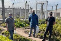 En la cárcel de Urdampilleta se amplía la huerta en un emprendimiento coordinado con el INTA