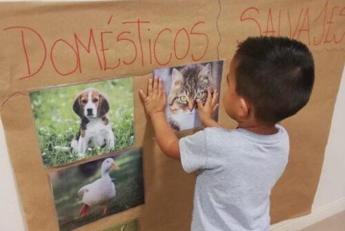 Reconocimiento de animales domésticos en los Jardines Municipales