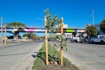 Días atrás se realizó la plantación de árboles en separadores
