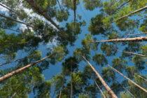 El mundo empieza una reconciliación con el ambiente: día mundial del ambiente