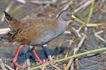 La Máxima como un centro de rescate y rehabilitación de fauna silvestre